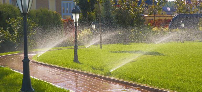 Для чего поливать газон?
