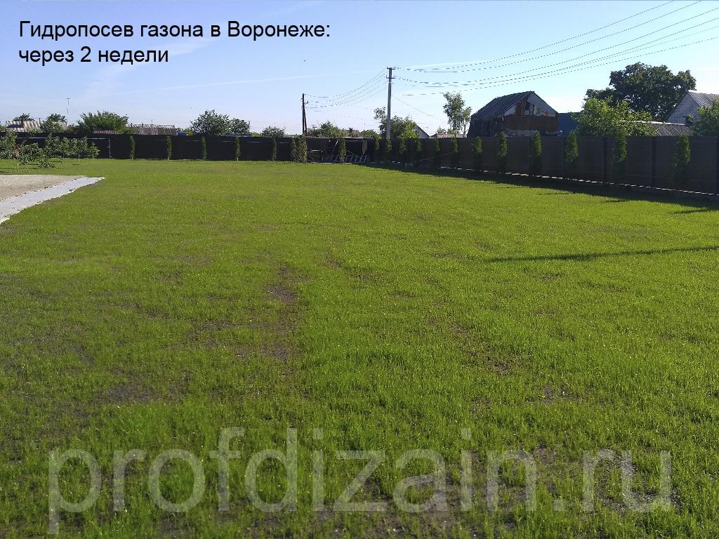 Гидропосев_Воронеж_2